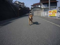 散歩20130324-3