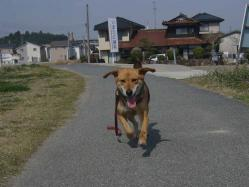 散歩20130324-4