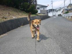 散歩20130325-1