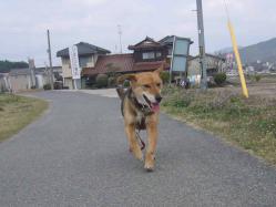 散歩20130325-2