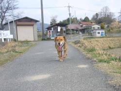 散歩20130325-3