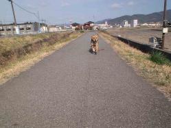散歩20130326-2