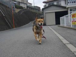 散歩20130328-1