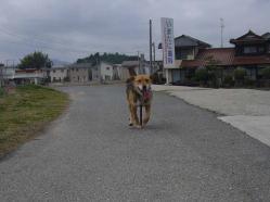 散歩20130328-3