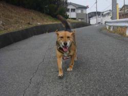 散歩20130329-2