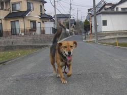 散歩20130329-3
