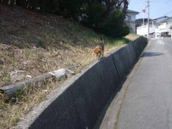 散歩20130330-1