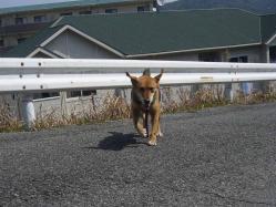散歩20130330-2