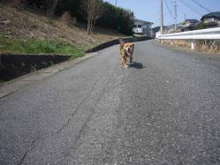散歩20130330-3
