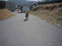 散歩20130330-4