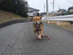 散歩20130331-2