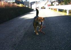 散歩20131216-2