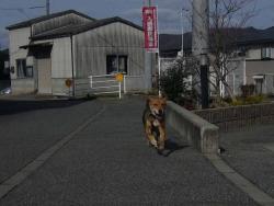 散歩20131216-3
