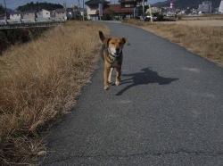 散歩20131216-5