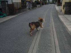 散歩20131217-1