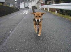 散歩20131220-2