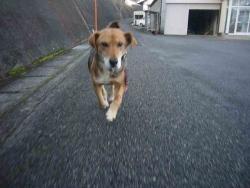散歩20131221-1
