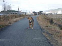 散歩20131221-2