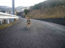 散歩20131221-4