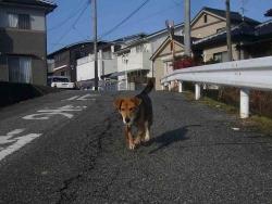 散歩20131222-2