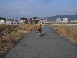 散歩20131222-3