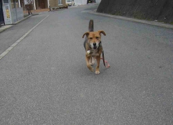 散歩20131223-2