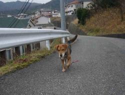 散歩20131223-4