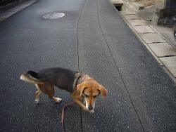 散歩20131224-1