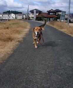 散歩20131224-4