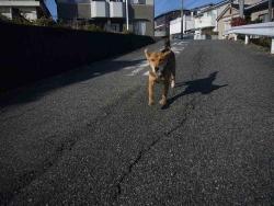 散歩20131225-2