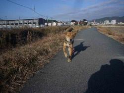 散歩20131225-4