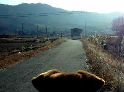 散歩20131225-5