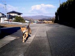 散歩20131227-1