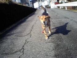 散歩20131227-2