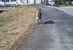 散歩20131227-3