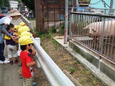 臼井豚舎1