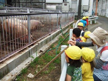臼井豚舎2