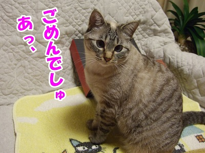 DSCF4246.jpg