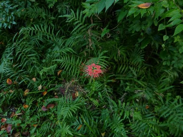 flowerred
