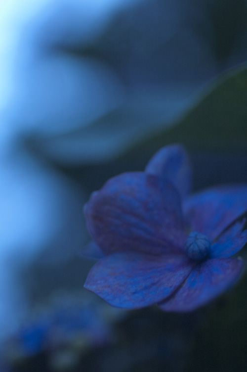 azisai_sunset_6_28_1.jpg