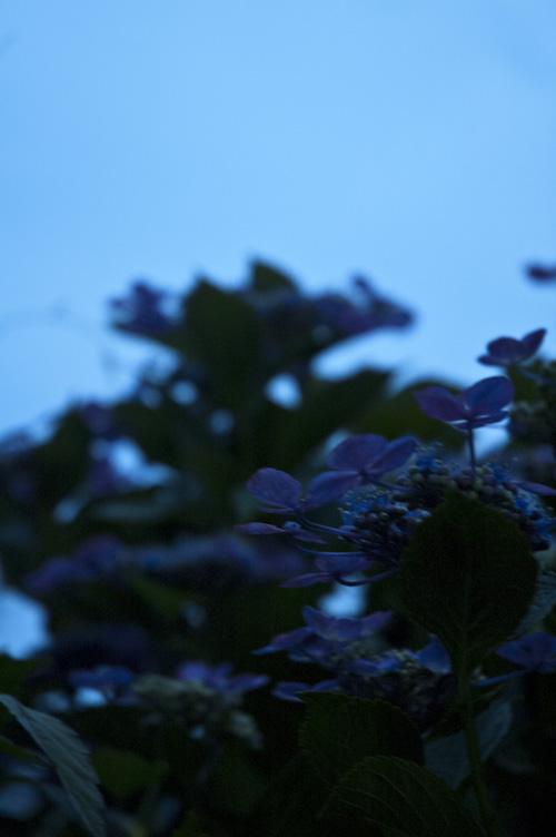 azisai_sunset_6_28_2.jpg