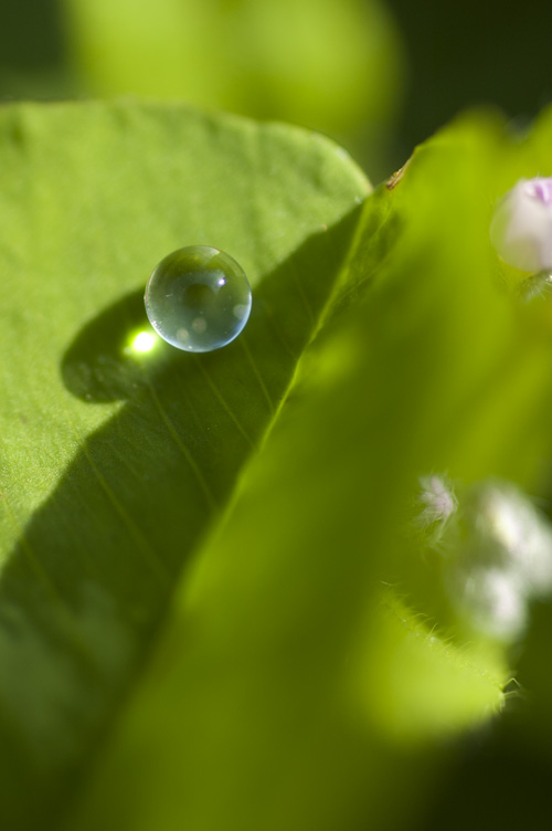 clover_13_4_13_1.jpg