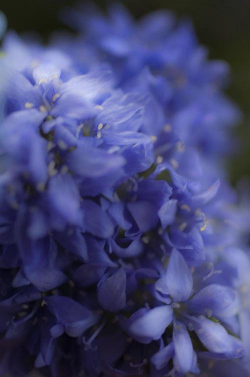 flower_13_5_18_24_2.jpg