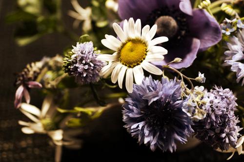 flower_13_5_19_4.jpg