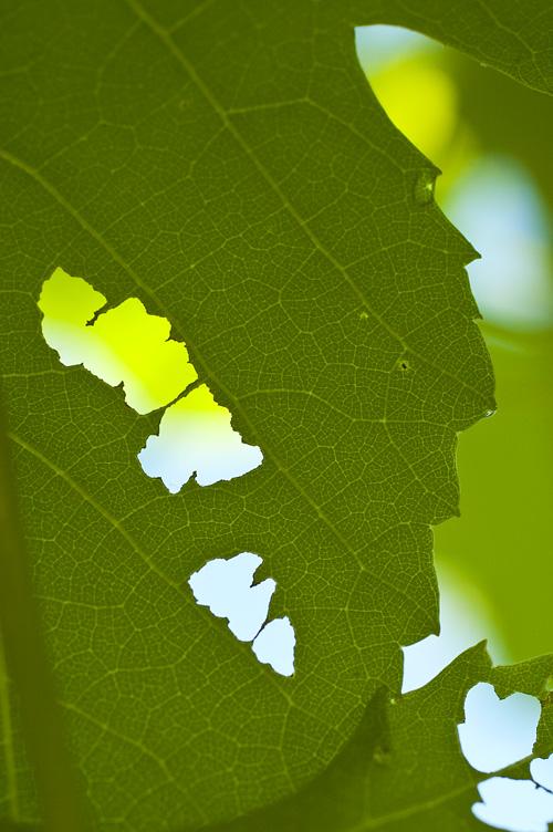 grape_13_6_15_5.jpg