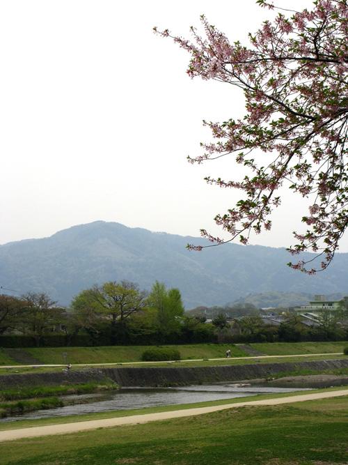 kamogawa_13_4_17_1.jpg