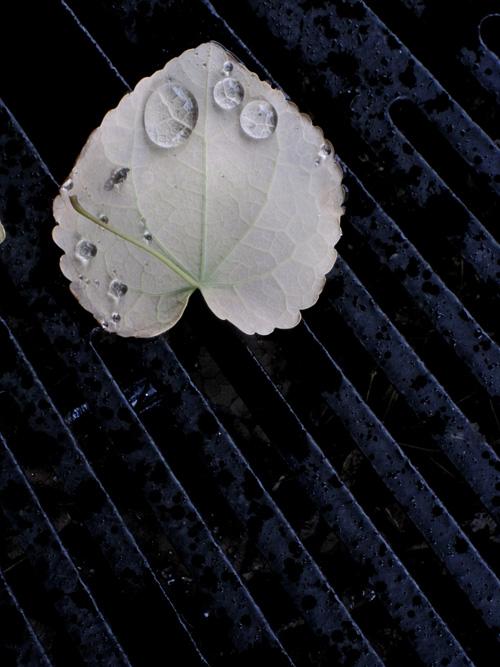 落ち葉と滴