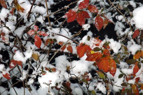 snow13_1_4_6.jpg