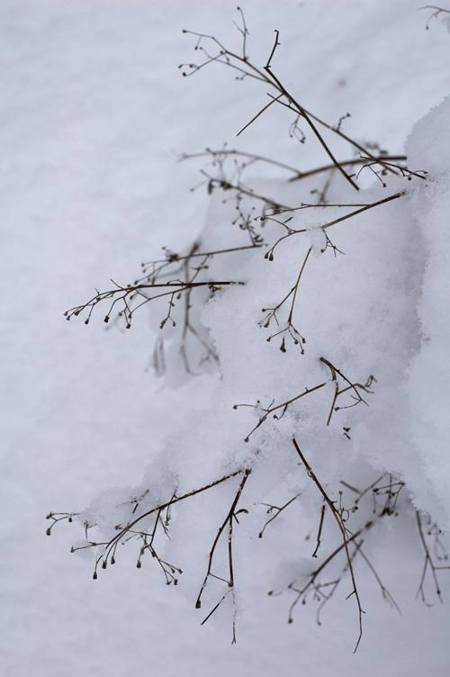 snow_13_1_18_12.jpg