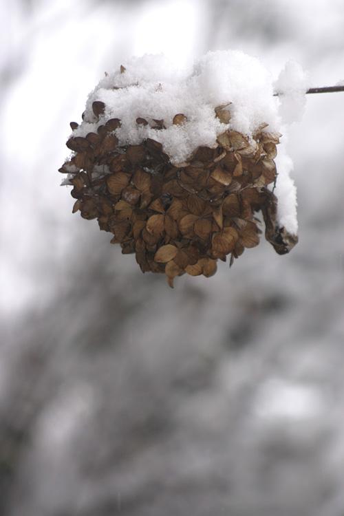 snow_13_1_18_4.jpg